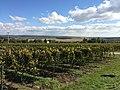 The vineyard.jpg