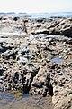 Tidal pool fault.jpg