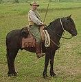 Tolfetano horse.jpg