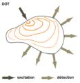 Tomographie par optique diffuse.png