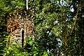 Torre Floresta Primária.jpg