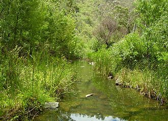 River Torrens - The river in summer at base of the Adelaide Hills, Athelstone