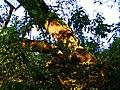 Traces Of Beaver - panoramio (1).jpg