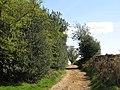 Track across Acomb Fell (3) - geograph.org.uk - 1388058.jpg