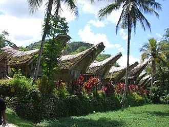 Cordyline fruticosa - Red ti planted around traditional Toraja houses in Tana Toraja, Sulawesi