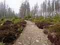 Trail near Sonnenkappe 15.jpg