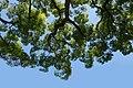 Tree (160656745).jpeg
