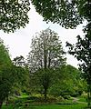 Tree (2537394048).jpg