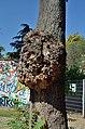 Tree Dadlerpark 03.jpg