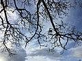 Tree Fractal.jpeg