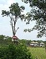 Tree House in Gorumara National park.jpg