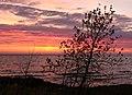 Tree at Sunrise, North Shore, Minnesota (14172482073).jpg