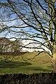 Tree beside the B5056 - geograph.org.uk - 625419.jpg