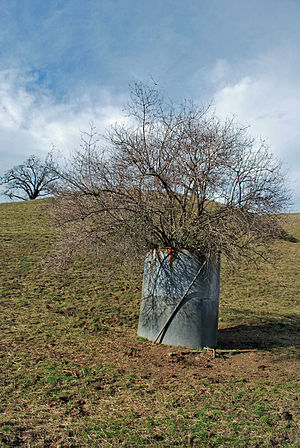 Grant Ranch County Park - Image: Tree in Tank