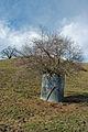 Tree in Tank.jpg