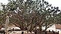 Tree on the tomb of sheikh ahmad jami (Custom).jpg