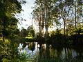 Tuckers Creek, Scottsdale Camping Site, Tasmania.JPG