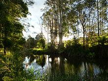 Scottsdale, Tasmania - Wikipedia