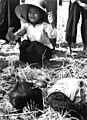 Tuy Hoa- Fifteen civilians were killed in the explosion of a homemade Viet Cong mine on a country road HD-SN-99-02085.jpg