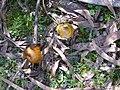 Two Mushrooms.jpg