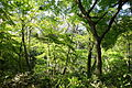 Understory - Institute for Nature Study, Tokyo - DSC02090.JPG