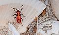 Unidentified insect in La Guardia.jpg