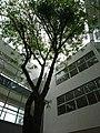 Universidad Autónoma Juan Misael Saracho (2).jpg