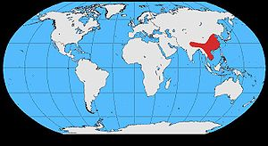 Red-billed blue magpie - Image: Urocissa erythrorhyncha map