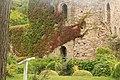 Usk Castle Ivy.jpg