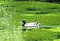 Utah State Hospital pond (28001701057).jpg