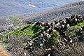 Vergina, Greece - panoramio - Robert Helvie (1).jpg