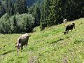 Viehgangeln am Grünten (6).jpg