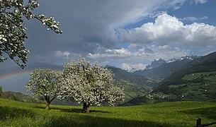 Viersch bei Klausen Apfelbäume.jpg