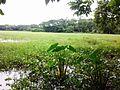 View at Village in Karpara - panoramio.jpg