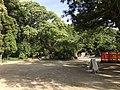 View in Kashii Shrine 2.jpg