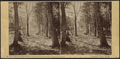 View of the Grove at the front of the Laurel House, Catskill Mts. N.Y, by H. S. Fifield.png