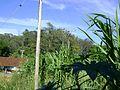 Visão de trás da vila do horto 2.jpg