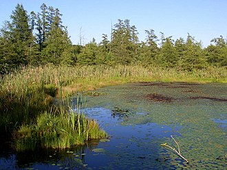 Volo Bog State Natural Area - The open-water center of Volo Bog, surrounded by tamarack trees