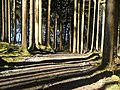 Vom Hohenegg zum Herrenwieser Weiher - panoramio.jpg