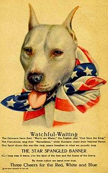 American Pit Bull Terrier - Wikipedia