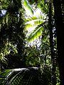 Wald (31156914470).jpg