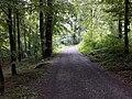 Waldweg im Jungholz Mettmenstetten.jpg