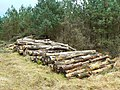 Well-weathered lumber - geograph.org.uk - 1767687.jpg