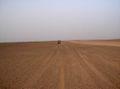 West Sahara 21-05-2005.jpg