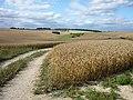 Wheat fields above West Ilsley - geograph.org.uk - 1656619.jpg