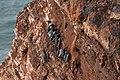 Wiki Helgoland Lummenfelsen.jpg