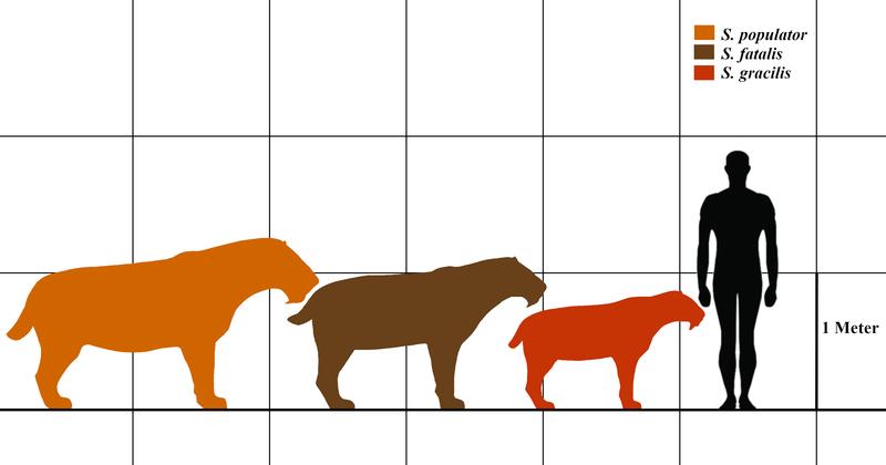 similodon-tamaño