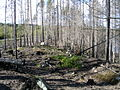 WildFireAreaNHorken0709- OverwiewRidge.JPG