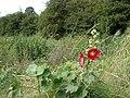 Wildflowers - geograph.org.uk - 903335.jpg