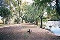 Wollundry Lagoon1 2003.jpg